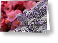 My Fair Flowers Greeting Card