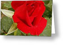My Favorite Rose Greeting Card