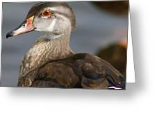 My Feather Friend - Wood Duck Greeting Card