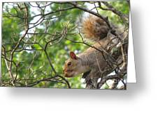 My First American Squirrel Greeting Card