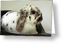 My Friend Bunny Greeting Card