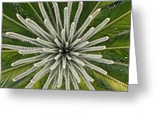 My Giant Sago Palm Greeting Card by Rebecca Cearley