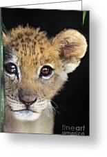 My Grandma What Big Eyes You Have African Lion Cub Wildlife Rescue Greeting Card