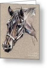 My Horse Portrait Drawing Greeting Card