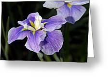 My Iris II Greeting Card