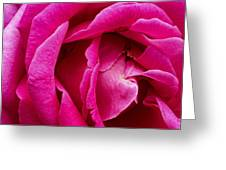 My Last Rose Greeting Card by Kenneth Feliciano