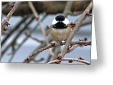 My Lil Chickadee Greeting Card by Rhonda Humphreys