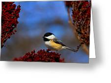 My Little Chicadee Greeting Card