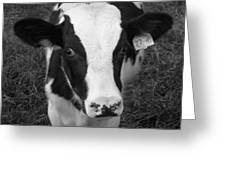 My Name Is Cow - Black And White Greeting Card