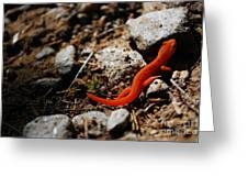 My Name Is Ned The Newt Greeting Card by Susan Hernandez