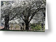 My Neighborhood In Spring Greeting Card