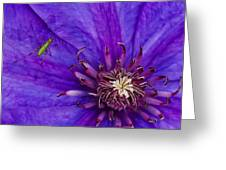 My Old Clematis Home Greeting Card