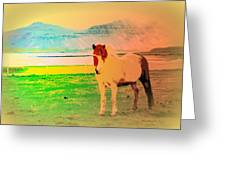 An Old Icelandic Mare, What Is Going On Inside Of Her  Greeting Card