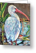 My One And Only Egret Greeting Card