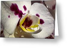My Orchid Greeting Card