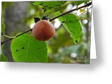 My Persimmon Tree Greeting Card