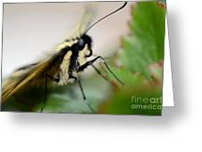 My Pet Butterlfy Greeting Card