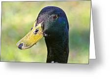 My Pond Buddy Greeting Card