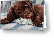 My Rope Toy Greeting Card