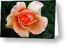 My Rose Greeting Card