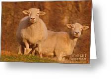 My Sheep ...   Greeting Card