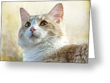 My Squishy Greeting Card
