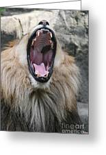 My What Big Teeth You Have Greeting Card