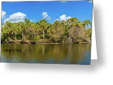 Myakka River From Jelks Preserve Greeting Card