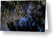 Myakka River State Park Reflections Sarasota Florida Usa Greeting Card