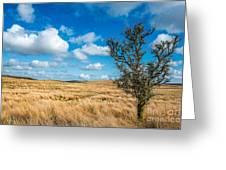 Mynydd Hiraethog Greeting Card