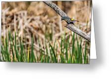 Myrtle Warbler Colors Greeting Card