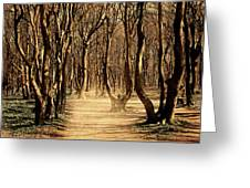 Mysterious Forest Greeting Card