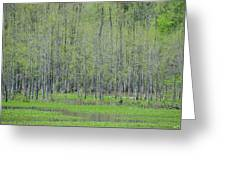 Mysterious Marshlands Greeting Card