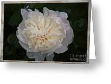 Mysterious White Peony Abstract Painting Greeting Card