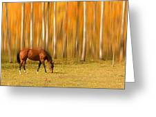 Mystic Autumn Grazing Horse Greeting Card