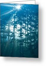 Mystic Light Greeting Card