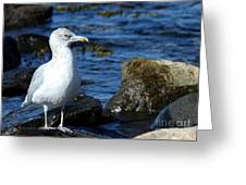 Mystic Seagull Greeting Card
