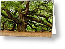 Mystical Angel Oak Tree Greeting Card