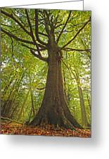 Mystical Forest Tree Greeting Card
