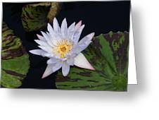 Mystical White... Greeting Card