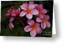 Na Lei Pua Melia O Wailua - Pink Tropical Plumeria Hawaii Greeting Card