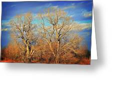 Naked Branches Greeting Card