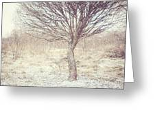 Naked Willow Tree. Winter Poems Greeting Card