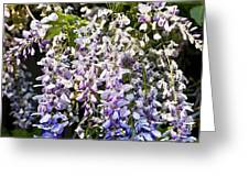Nancys Wisteria Cropped Db Greeting Card by Rich Franco