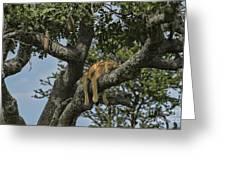 Nap Time On The Serengeti Greeting Card