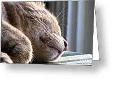 Nap Time Greeting Card by Sandra Bauser Digital Art