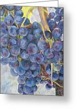 Napa Grapes 1 Greeting Card by Nick Vogel
