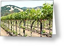 Napa Vineyard Grapes Greeting Card