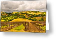 Napa Vineyard Greeting Card