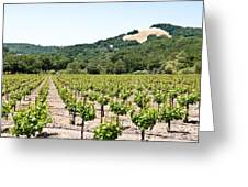 Napa Vineyard With Hills Greeting Card by Shane Kelly